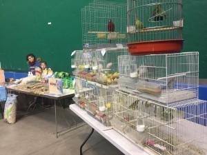 Aves preparadas antes de comenzar la exposición.